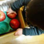 息子とりんご